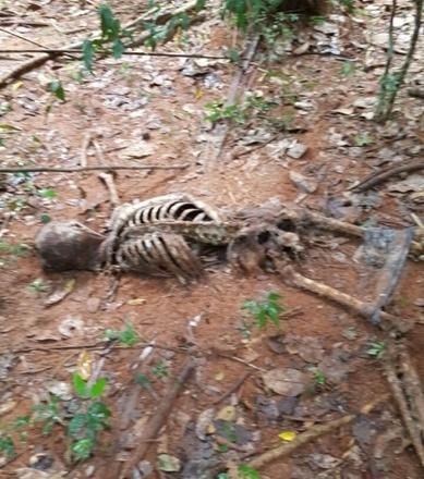 Corpo foi encontrado cerca 150 metros da estrada única que dá acesso à usina hidrelétrica de Sinop