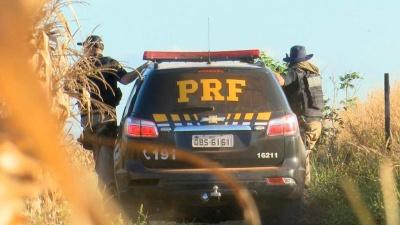 Policiais rodoviários procuraram pelo suspeito na plantação de milho em Sorriso
